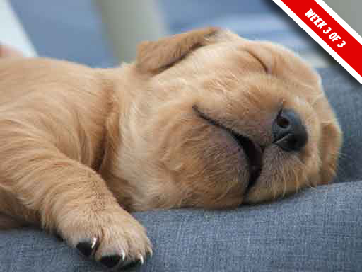 tips for first week with a new puppy final week