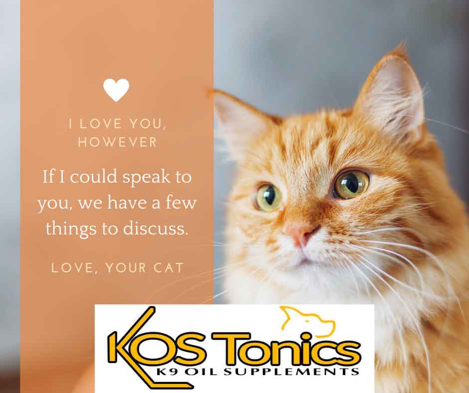 If your cat could talk, things your cat might tell you from Kos Tonics